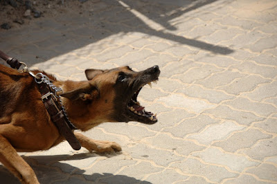 Dealing with loose aggressive dogs on walks