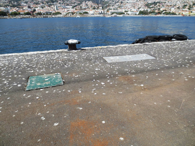 "seagulls ""paintings"" in Funchal port"