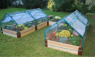 Raised Beds with Greenhouse Cover