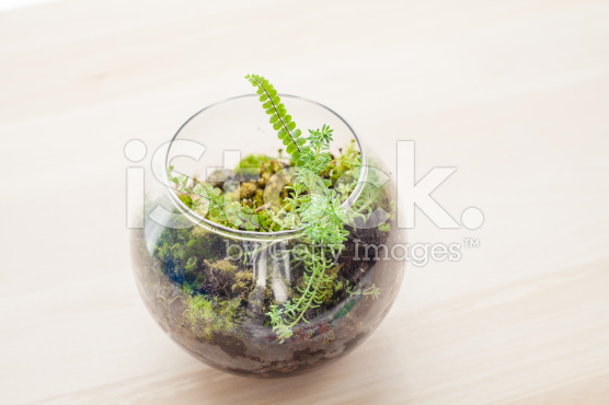 Terrarium-Succulent-terrarium-jakarta-indonesia-blogspot-com6