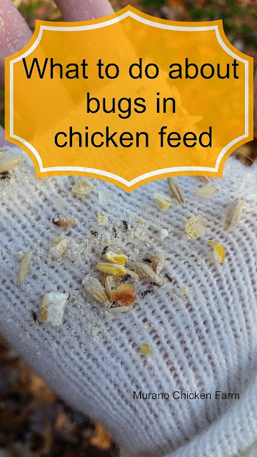 weevils, moths, chicken feed