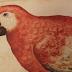 Compendian el legado herbolario prehispánico, fruto de la primera expedición científica de la edad moderna