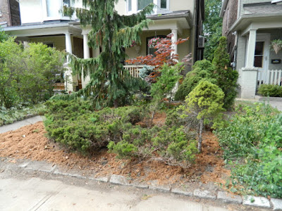 Leslieville Toronto front garden summer cleanup after by Paul Jung Gardening Services