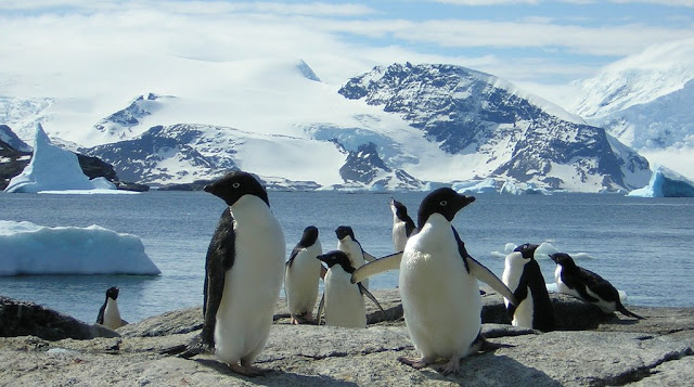 Thought Antarctica's biodiversity was doing well? Think again