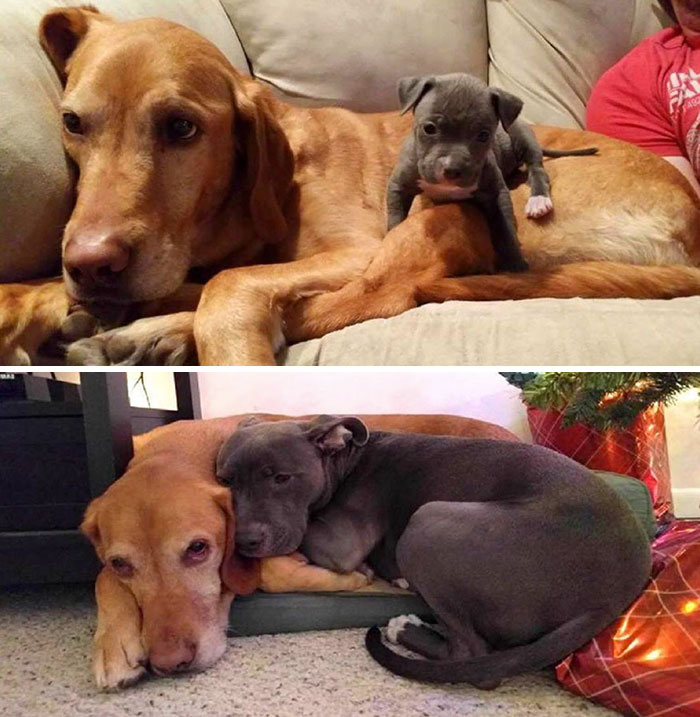 #13 Friends Forever - 15 Before & After Pics Of Animals Growing Up Together