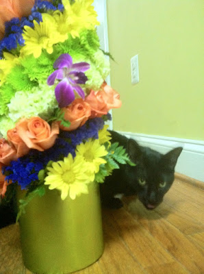 Feline Fred and Flowers - Stein Your Florist Co.