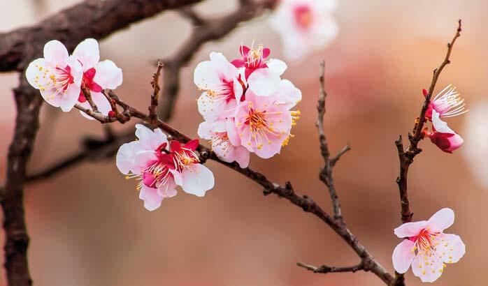 Kirschblüte aus Sicht wiz khalifa Dating-Liste