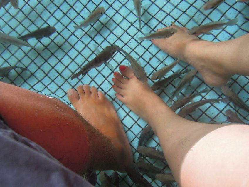 Fish spa at Manila Ocean Park
