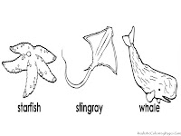 Starfish, Stingray And Whale The Animals Of Ocean