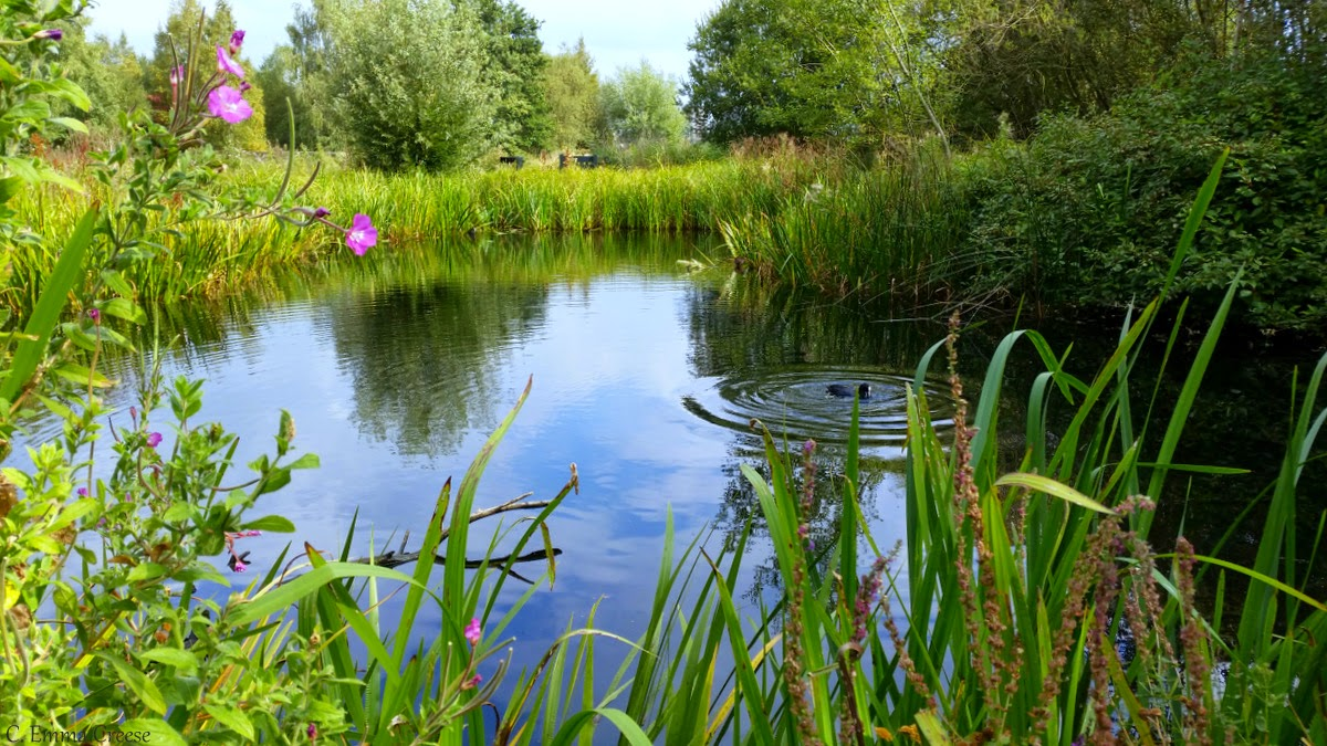 Barnes Wildfowl and Wetlands Centre  Adventures of a