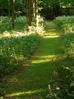 W angielskiej części ogrodów nieborowskich