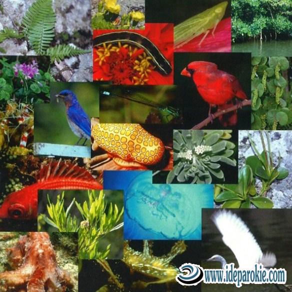 Keanekaragaman Hayati Meliputi Pengertian, Macam-macam Definisi, Fungsi dan Manfaatnya