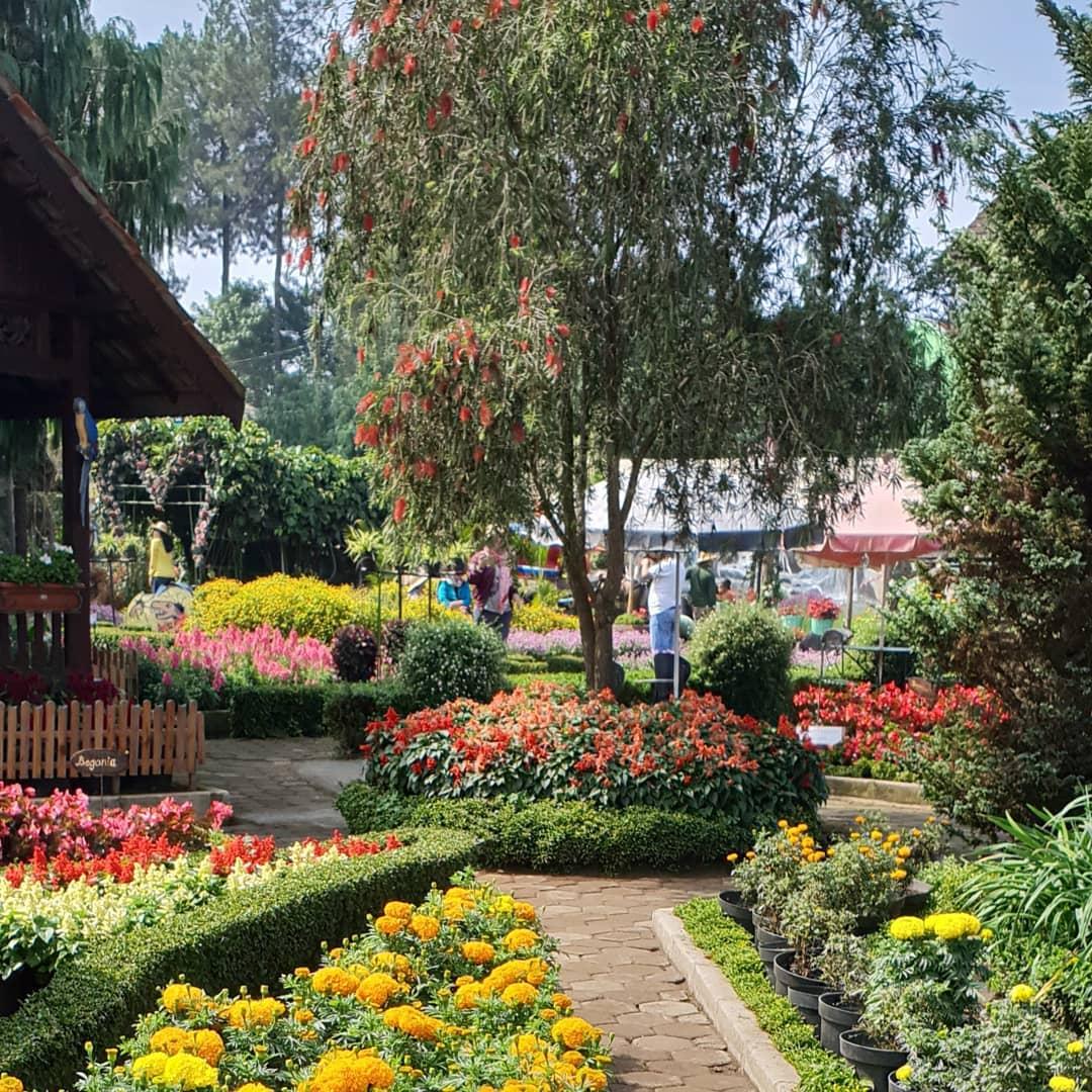 Taman Begonia Kebun Bunga Lembang Bandung Tempat Wisata
