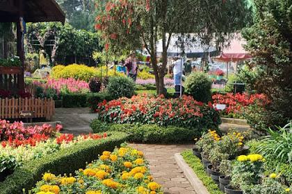 Taman Begonia Kebun Bunga Lembang Bandung, Tempat Wisata Instagramable dan Romantis