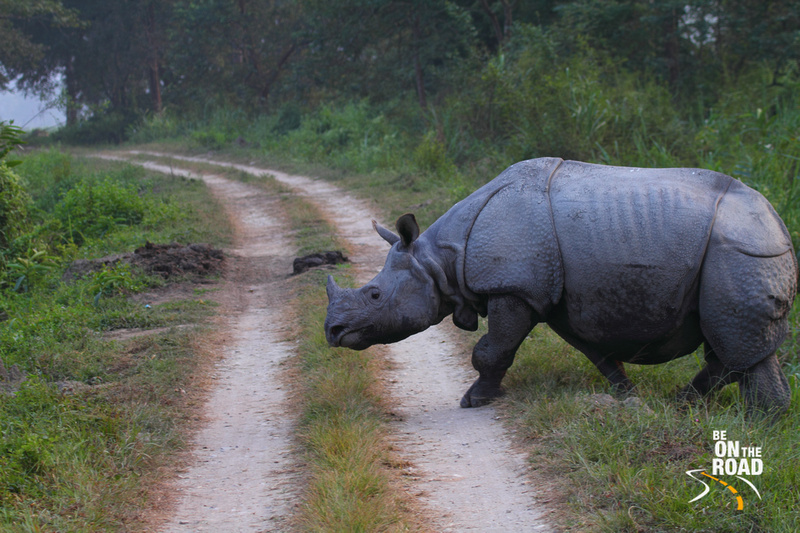 Indian Rhino at Kaziranga, Assam