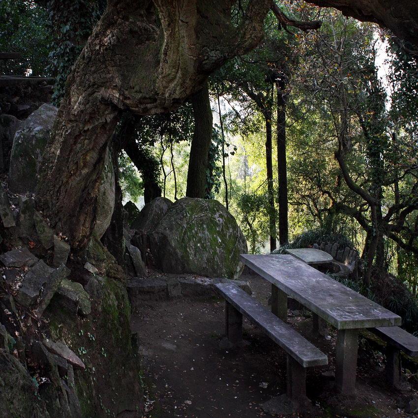 Zona de merendas com uma pesa e bancos corridos em cimento, no lado direito. À esquerda um tronco de árvore, muito grosso. Ao fundo dois pedregulhos e por fim floresta