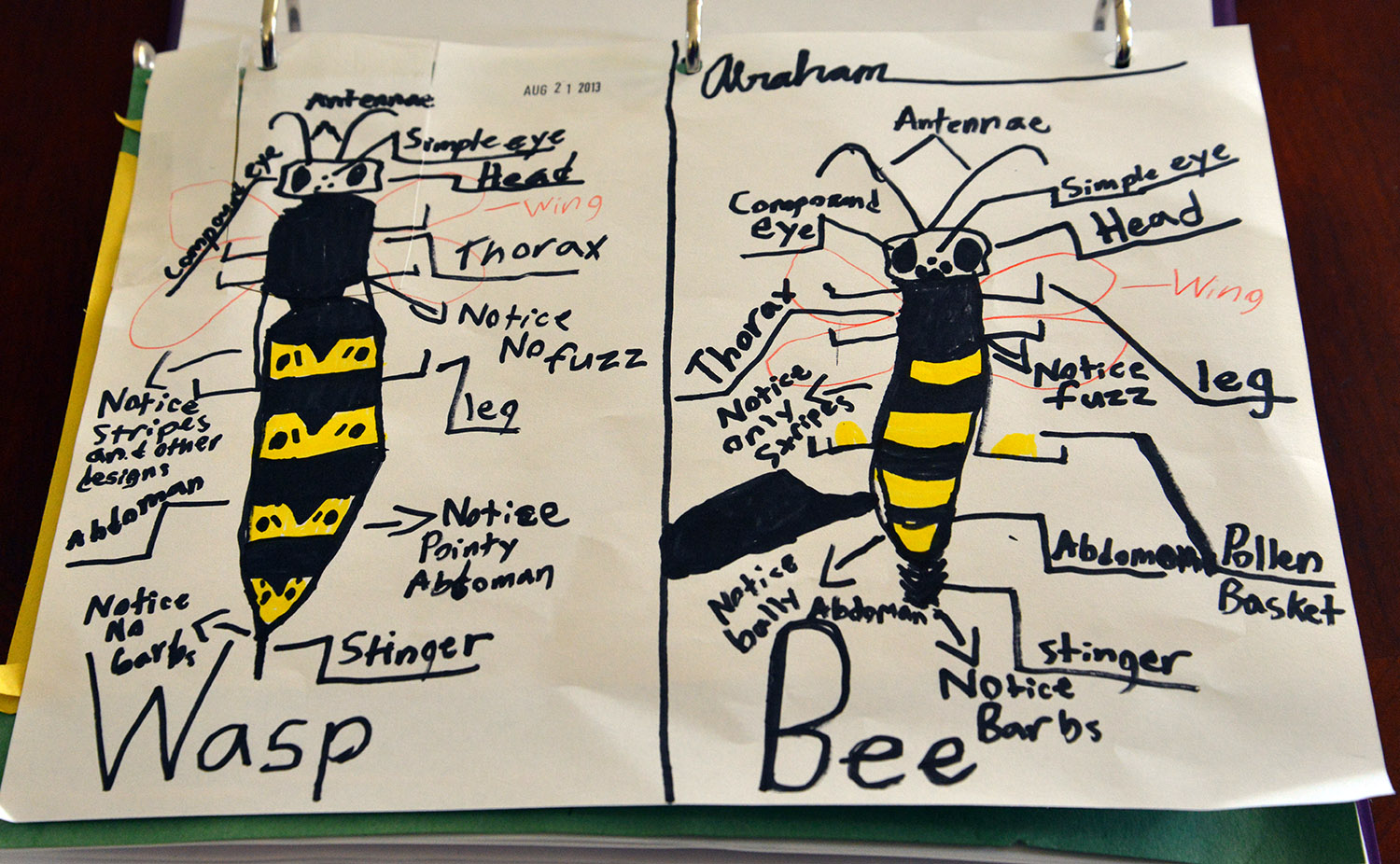 A school of fish: Bees vs. Wasps, and Stingers