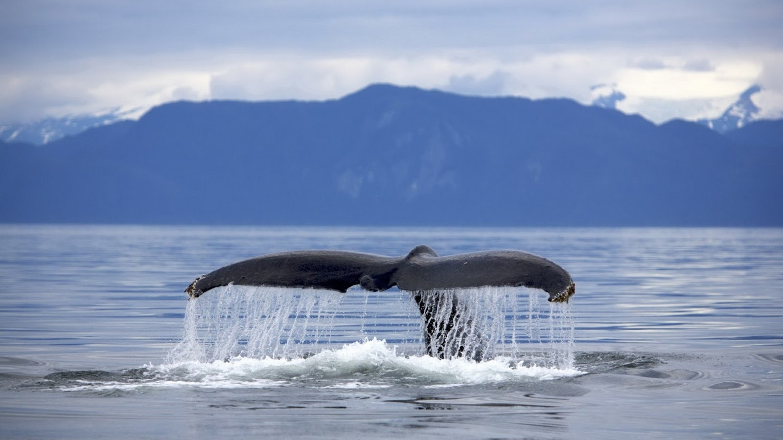 mother nature: Blue Whale - Largest Mammal on Earth