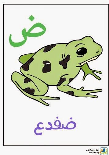 ملصق تعليمي للأطفال لتعليم حروف الهجاء (حرف الضاد)