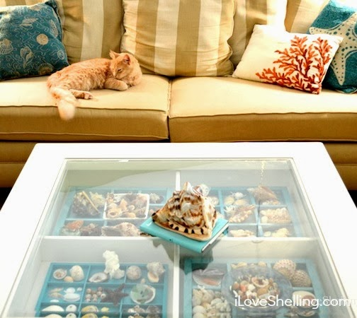 seashell display coffee table
