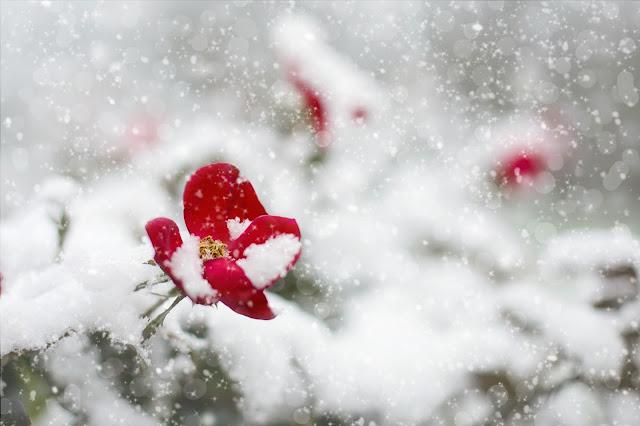 Inverno in giardino