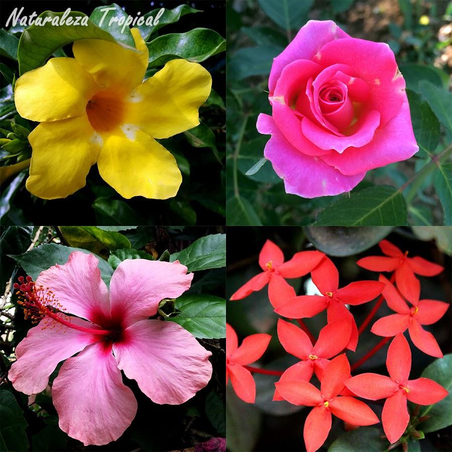 4 plantas perfectas para cultivar en exteriores