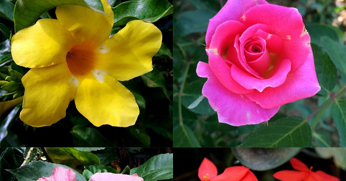 Naturaleza tropical 4 arbustos con flores hermosas - Plantas de jardin exterior ...
