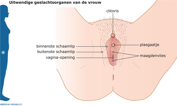 fungal infections Vaginal