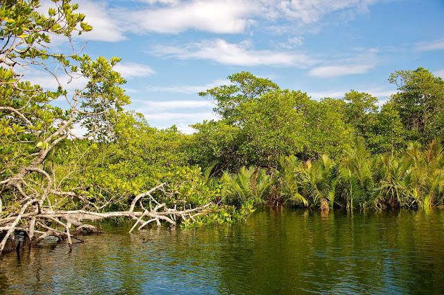 Mangrove au Cambodge, Photographie par marc uhlig (cc)