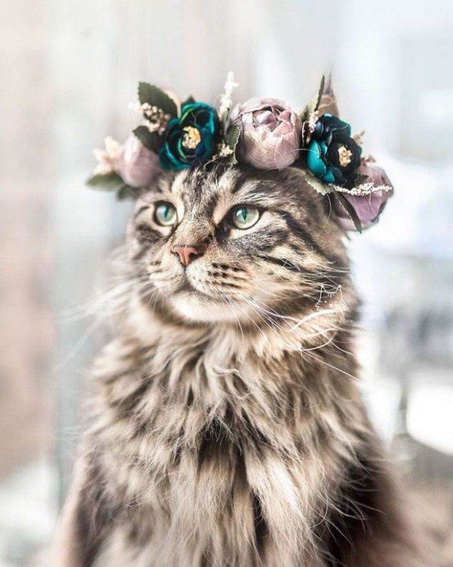 Flower Wreaths: 16 Most Beautiful Flower Crowns for Cats and Dogs to Look Majestic