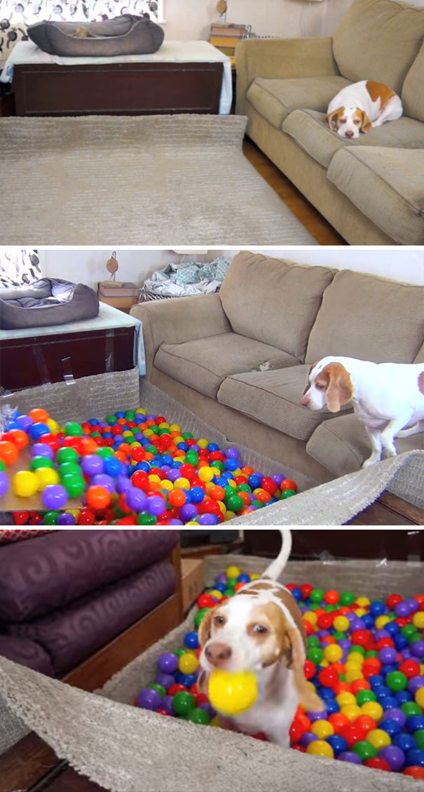 20 Dog Owners Who Were Hilariously Creative (Pictures)