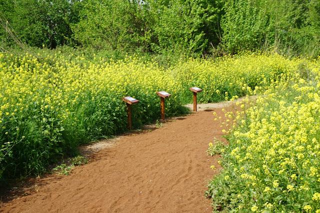 פארק החושים - חול