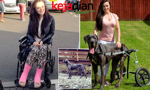 Kisah Anjing Great Dane Gemma McKee, Penari One Direction