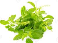 Manfaat daun Kemangi untuk kecantikan kulit dan wajah