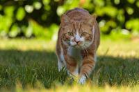 Mon chat chasse et ramène ses trophées morts, me fait-il un cadeau ?