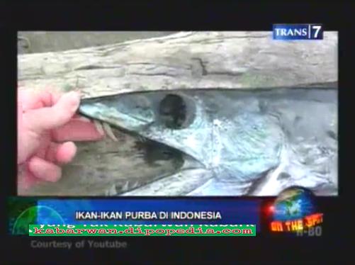 Indonesia dianugerahi oleh Yang Maha Kuasa dengan kekayaan alam dan isinya termasuk beberapa jenis ikan yang ternyata tergolong langka. Pada video diberikut ini, Anda akan mengetahui beberapa jenis Ikan Purba Di Indonesia.