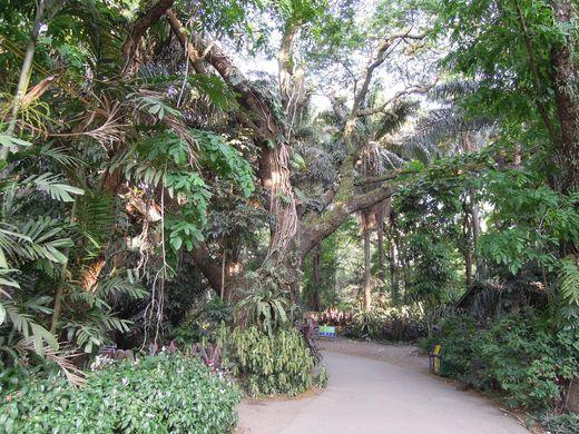 Trees at La Mesa Eco Park in Quezon City