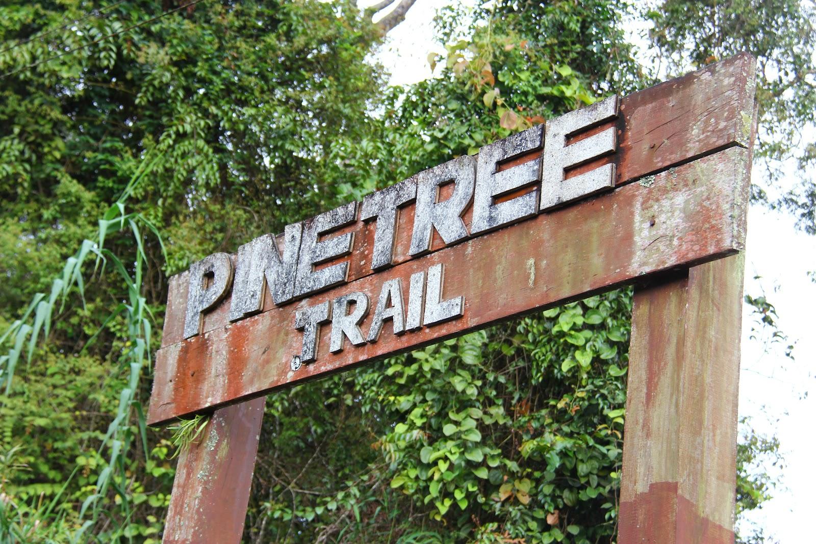 Pine Hill Tree & Twin Peak, Fraser Hill