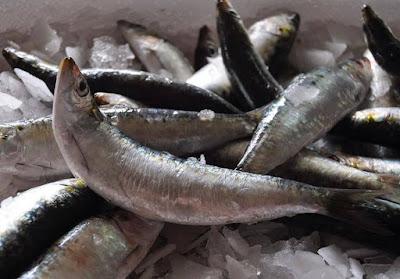 فوائد سمك السردين الصحية و الغذائية