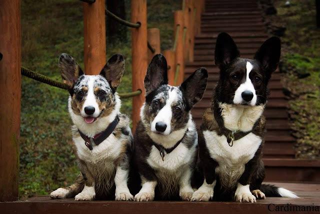 co spakować psu, co zabrać na wakacje z psem, psia apteczka, psi bagaż, pies w podróży, podróże z psem, wakacje z psem
