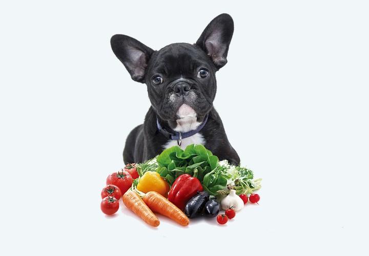 Légumes Autorisés Pour Chien - Vous devriez faire attention à cela