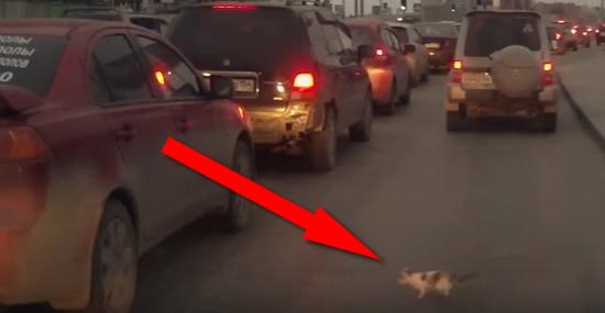 Resgate dramático - gatinho se salva da morte milagrosamente - Img 1