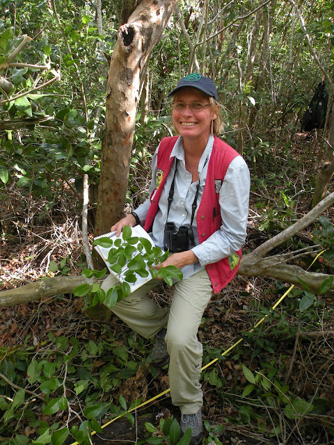 Mapping the first family tree for tropical forests