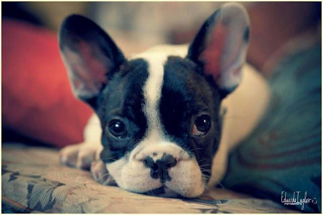 10 Dog Breeds That Have The Cutest Puppies