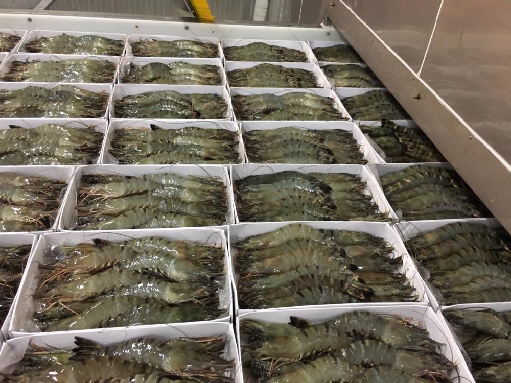 Supplier Shrimp Mail: Black Tiger Shrimps Suppliers, Asian Tiger Shrimps, Giant