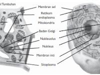 Struktur Sel: Dinding Sel, Membran Plasma, Sitoplasma, Inti Sel