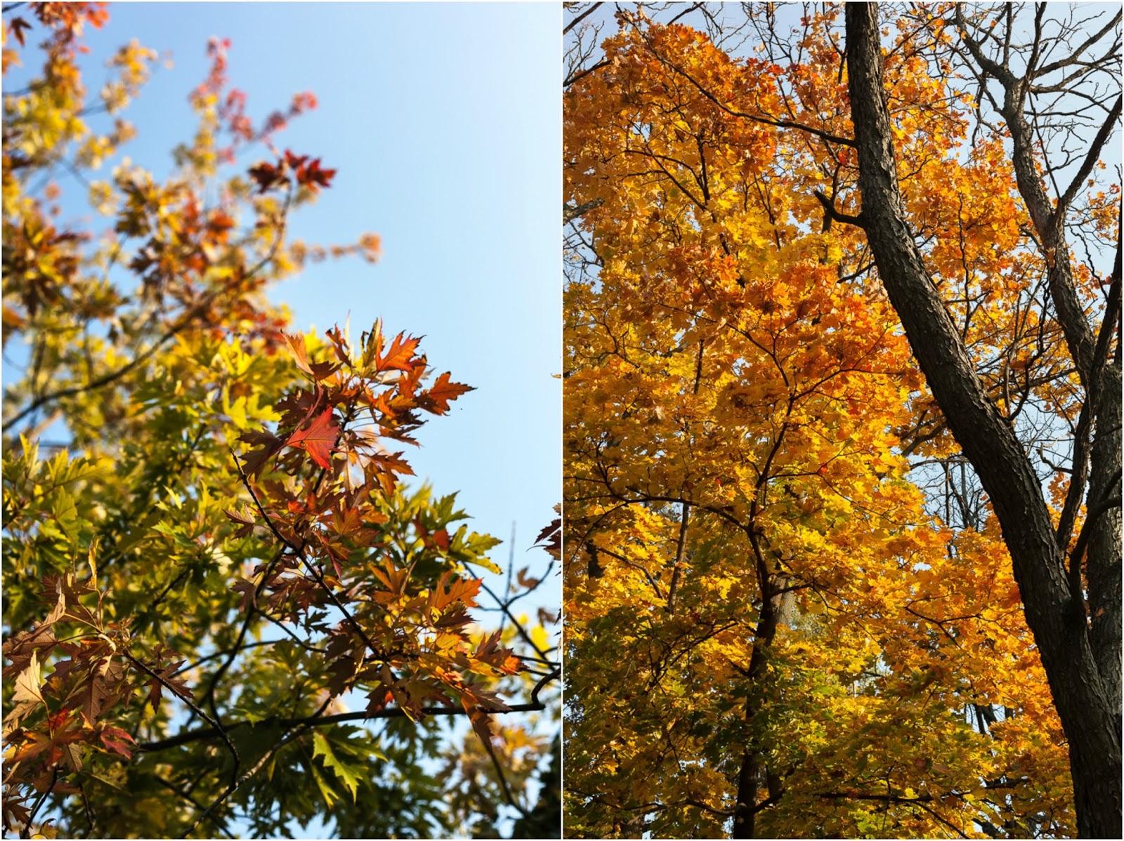 budapest autumn