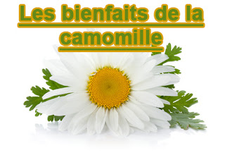 CAMOMILLE REMEDE UNIVERSEL