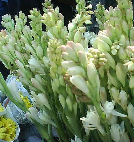 Contoh Gambar Bunga Sedap Malam Contoh Blue