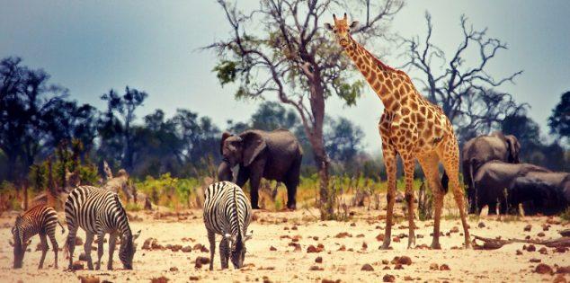 أفضل 10 أغلى الحيوانات في العالم